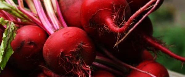 Rödbetor   Juiceingredienser